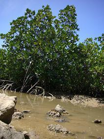 manguro-bu2.jpg