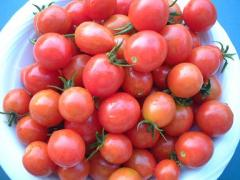 tomato,npg