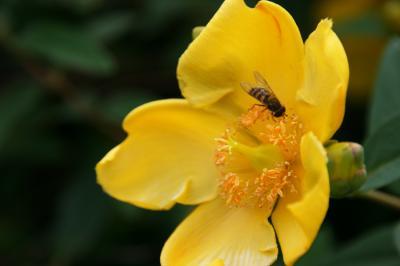 黄色い花の写真1