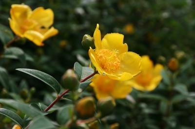 黄色い花の写真2
