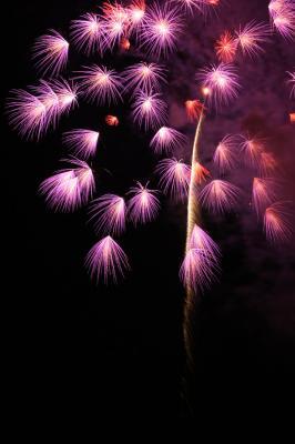 花火の写真1