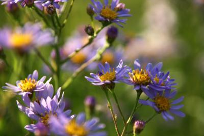 薄紫色の花 写真2