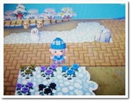 ココで青バラ咲くのは2回目だよ