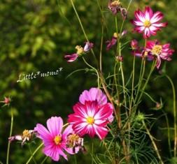 花もそれぞれの個性
