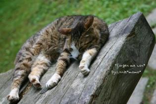 *寝ん猫ころり*