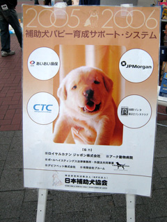 犬,いぬ,Dog,わんわん,akita dog,秋田犬,フク