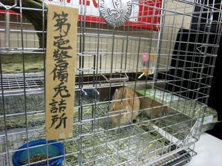 うさぎ,ウサギ,兎,Labbit