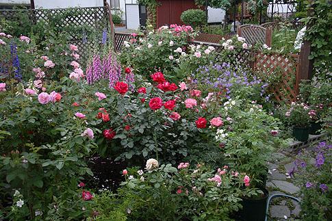 6月の庭01