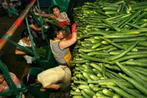 キュウリを出荷する出稼ぎ労働者=写真は、2006年6月、広州で