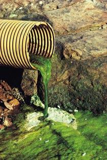 緑色の排水