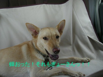 s-CIMG4652.jpg