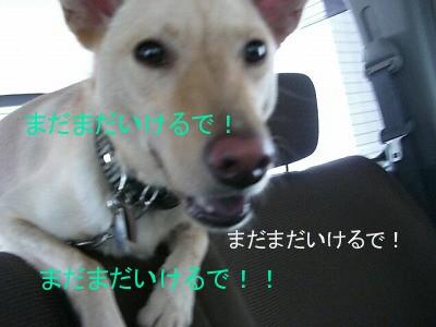 s-CIMG4660.jpg