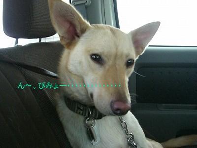 s-CIMG4669.jpg