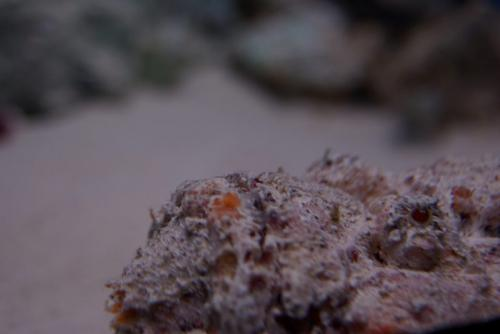 ニライカサゴ