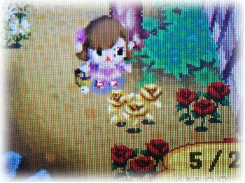 金のバラ♪