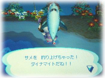 サメが釣れたw( ̄Д ̄;)wワオッ!!
