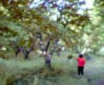 20070811153315.jpg