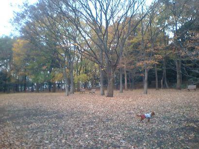2006121203.jpg