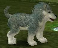 オオカミ20台