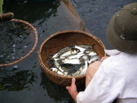 vietnumfish.jpg