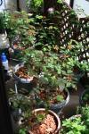 Garden060416-1