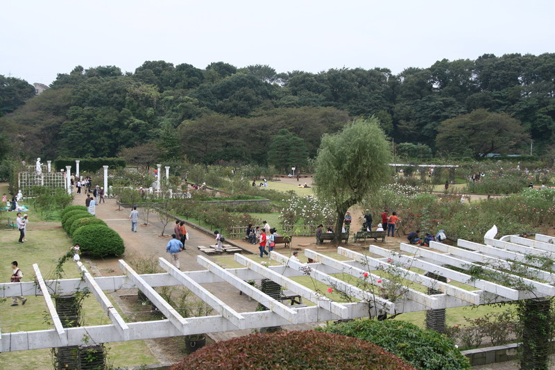 0610生田緑地バラ苑6