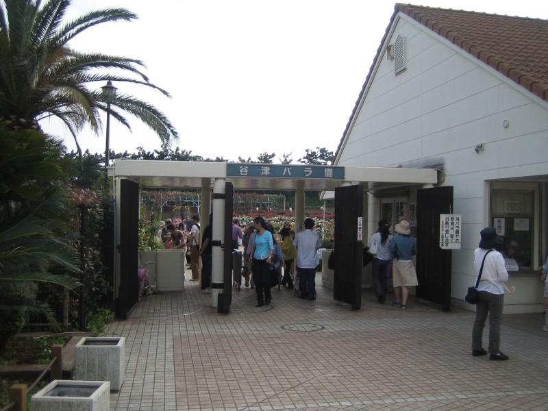 20060526谷津バラ園1