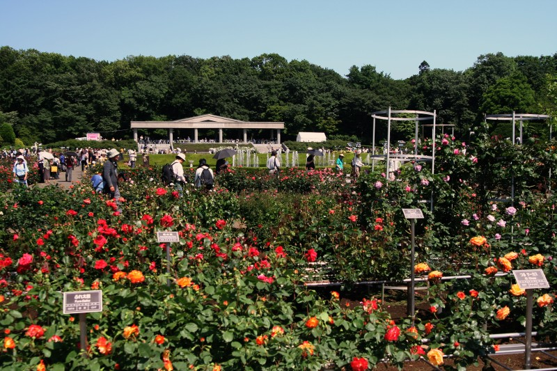 20060521神代植物園バラフェスタ2