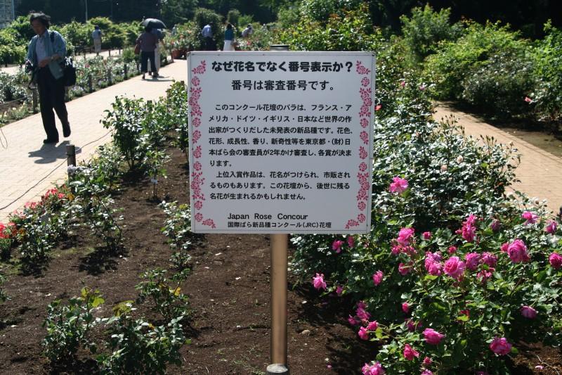 20060521神代植物園バラフェスタ 新品種コンクール