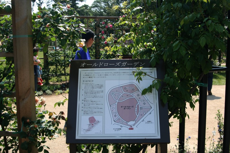 20060525佐倉草笛の丘バラ園8