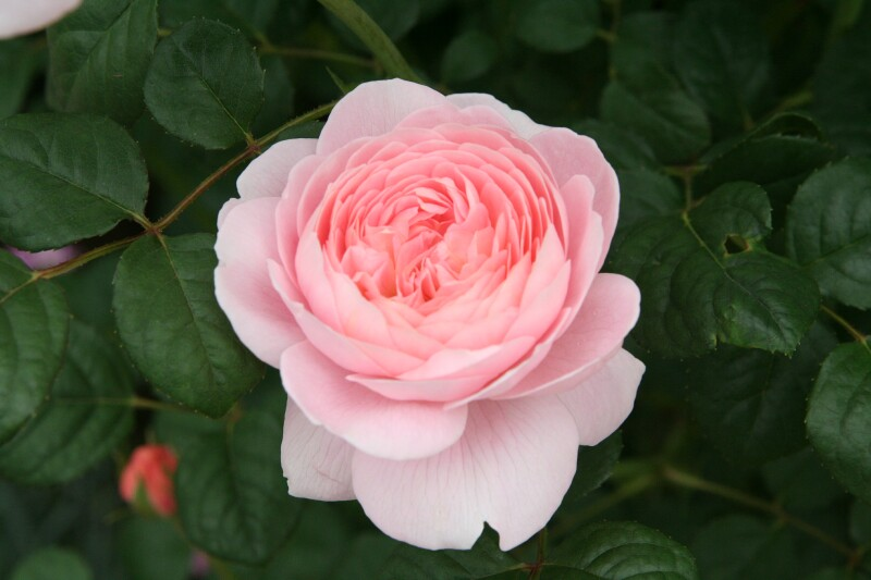20060527花フェスタ1