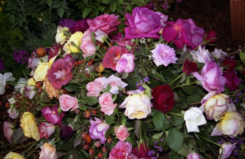 大阪国際バラ会議'99 -2