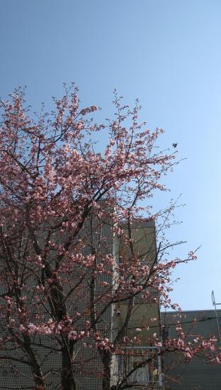 右上の枝の近くを鳥さんが。。。