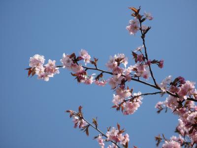 空の水色と桜色~~