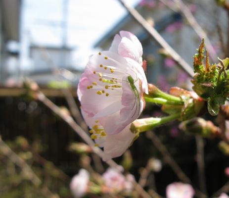 桜君と・・・????