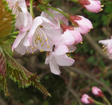 桜君とありさん