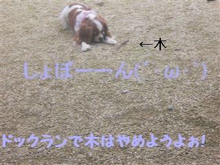20060818211415.jpg