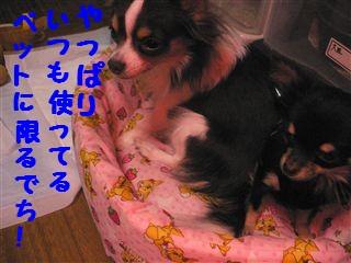 20060821192402.jpg
