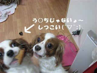 20060920121315.jpg