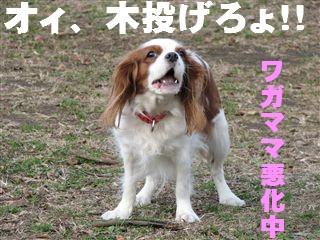 20070111145941.jpg