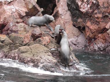 blog 405 Peru
