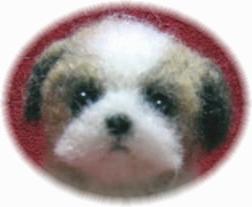 シーズー 子犬 2 顔