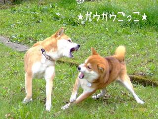 猛犬かっ!?