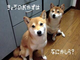 お肉だよ~(ぺらぺらの)