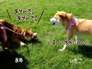 あゆちゃんといちご姉さん