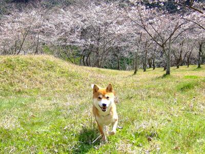 桜とひかり☆