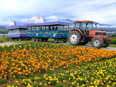 お花畑とトラクター号