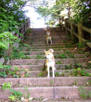 ステキ階段