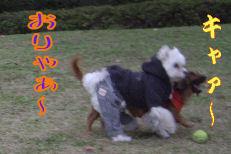20061211204559.jpg