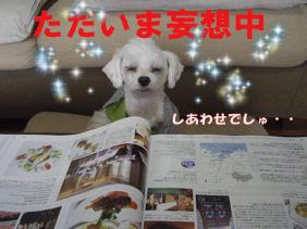 20070106180324.jpg